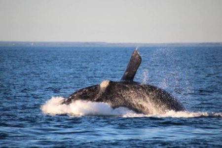 Plenty of Whale watching oppotunities in Portland check out whalemail.com.au for sightings